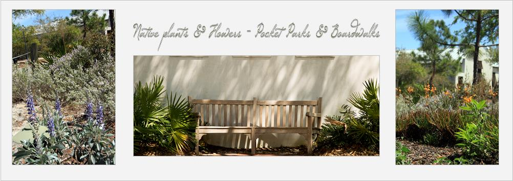 native plants & parks of Rosemary Beach, FL